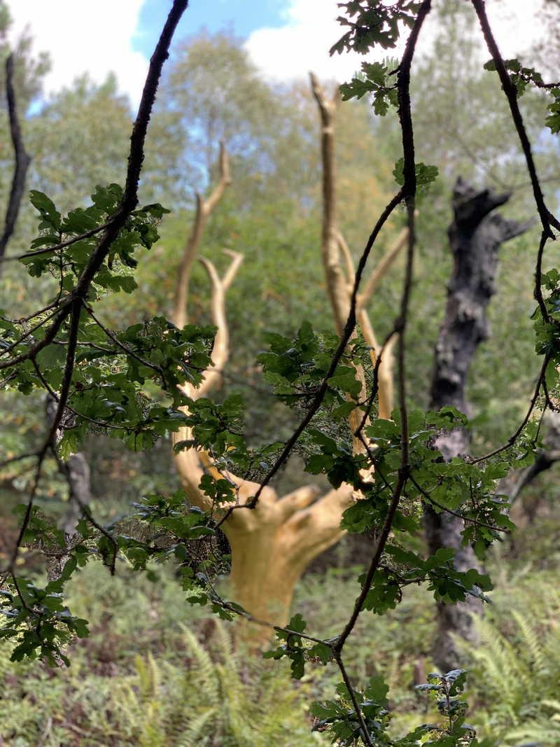 L'arbre d'or de la forêt de Brocéliande
